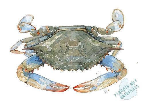 H03 Study of a Crab