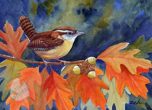 Z62 Autumn Wren