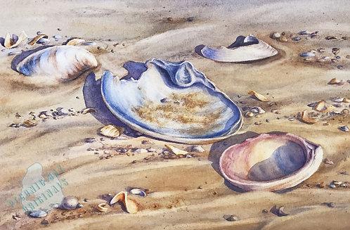 E14 Tideline Shells