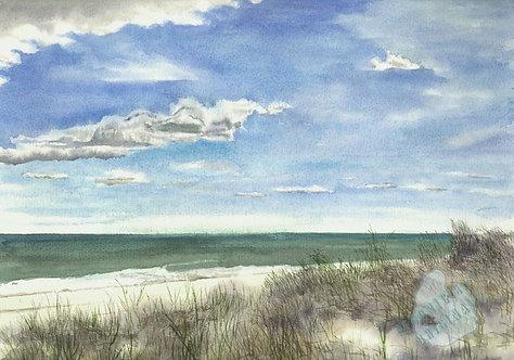 G41 Beach Grass