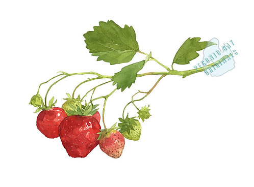 H26 Strawberry Sprig