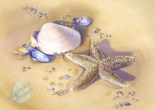 E12 Starfish