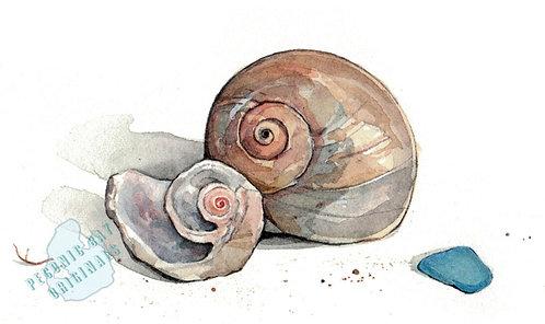 H06 Moon Snail