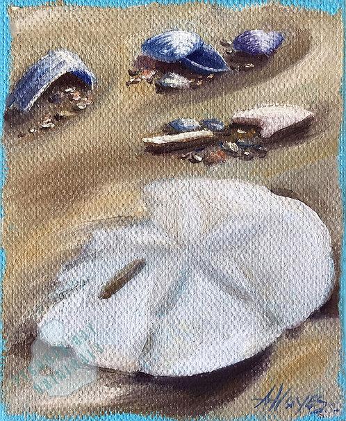 E09 Shells & Sand Dollar