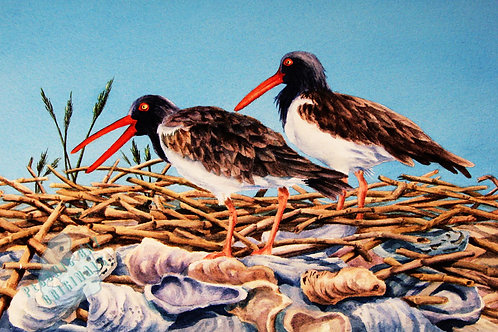 E05 Oyster Catchers
