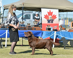 high res richmond Labrador Club of Canada National Specialty Aug 2021-422-Edit.jpg