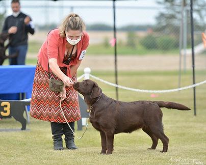 high res richmond Labrador Club of Alberta Specialty Aug 2021-275-Edit.jpg