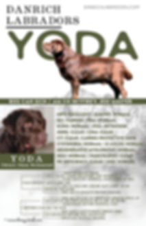 Yoda Color EDIT (1).jpg