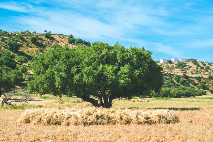жидкое золото Марокко