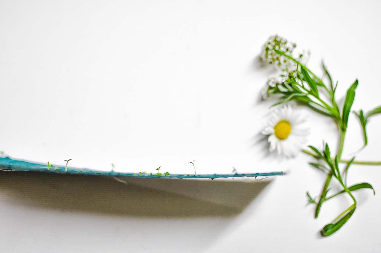 carta che germoglia-carta piantabile