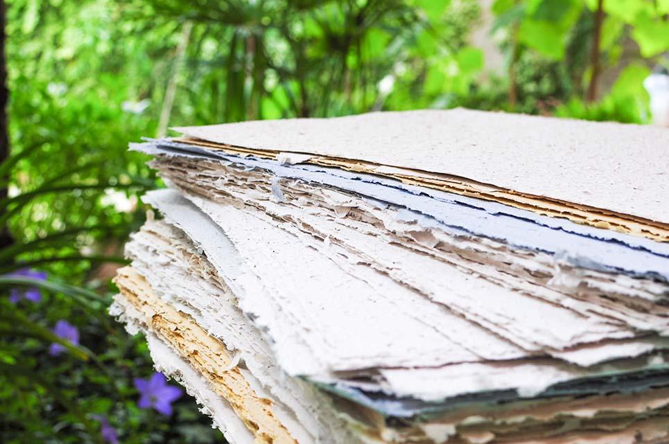fogli piantabili carta che germoglia