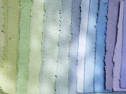 colori fogli carta che germoglia