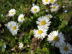 fiori nati dalla carta piantabile