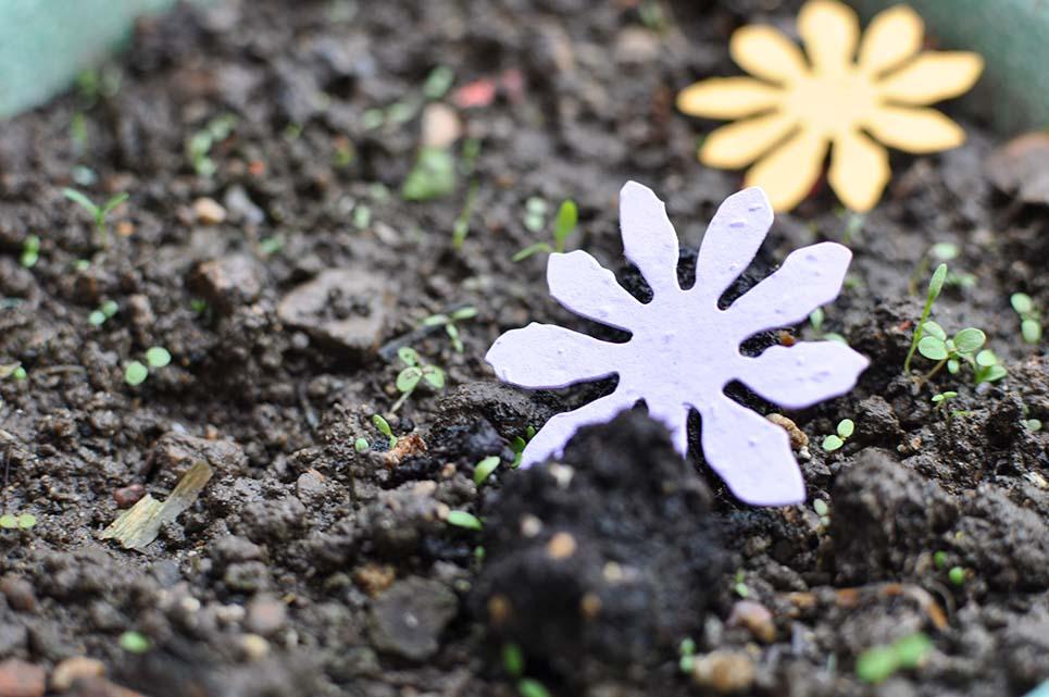 fiore fatto con carta che si pianta