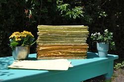 carta che germoglia, seed paper
