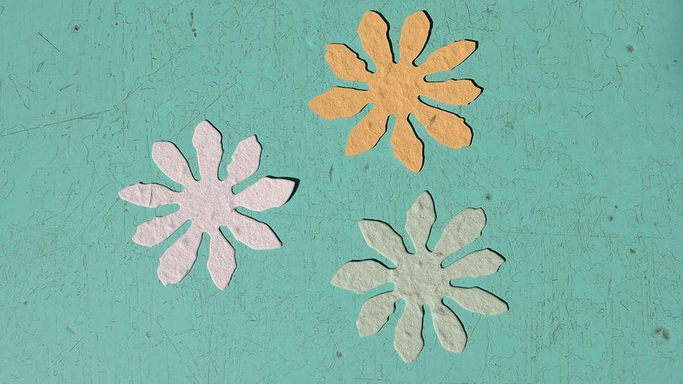 F5 Fiore Piantabile 5,5x5,5 cm in Carta che Germoglia