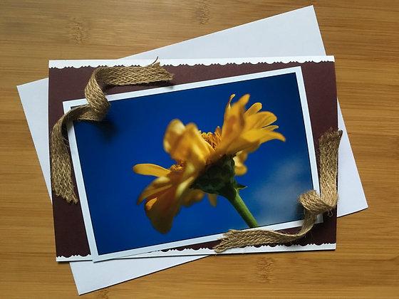 Handmade Card ''Yellow Cape Daisy''