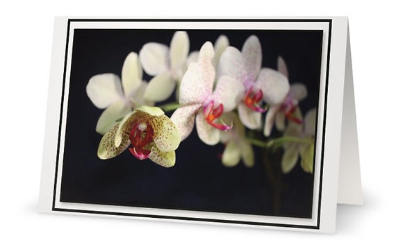B-Day Card ''White Orchids''