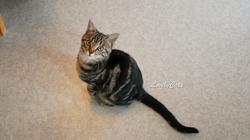 Olga, chatonne de 4 mois et demi