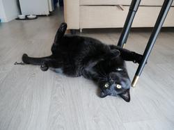 Luna, 4 ans