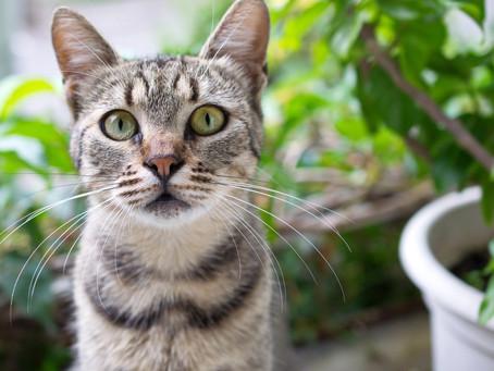 Le printemps et ses dangers pour votre chat