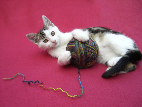 Confinement: comment occuper son chat ?
