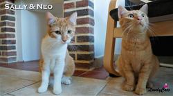 Neo & Sally