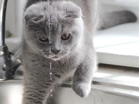 Votre chat boit-il suffisamment ?