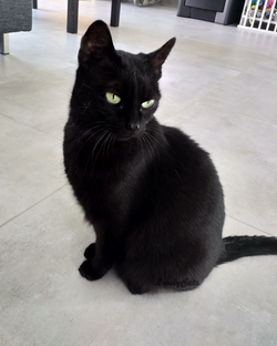 Lily, 9 ans