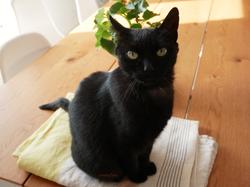 Lily, 9 ans (déjà gardée en mai)