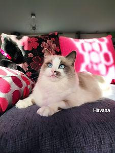 Havana_edited.jpg
