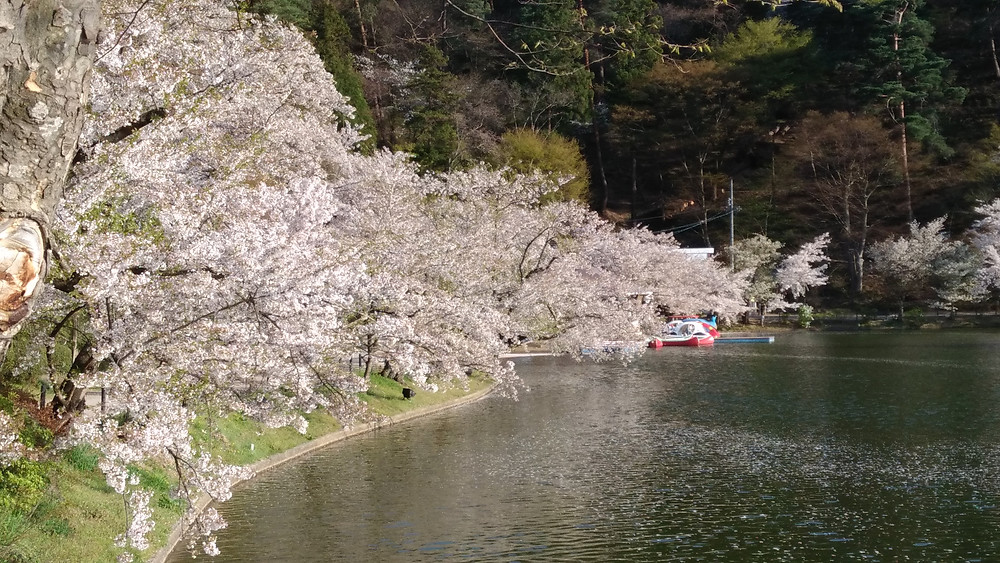 春の臥竜公園