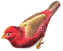 Red%20Bird_edited.png