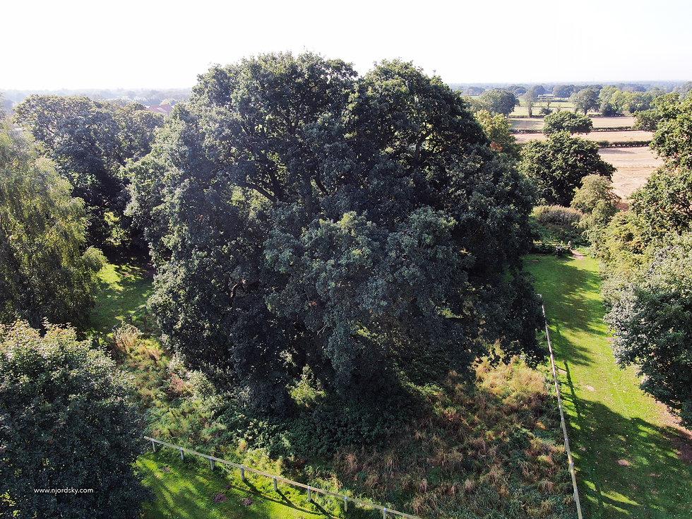 veteran oak 202001.jpg