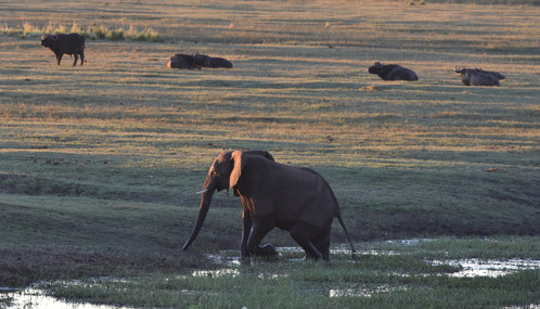 Evening in the Chobe Valley