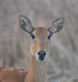 Kafue National Park DSC_2135_01.JPG