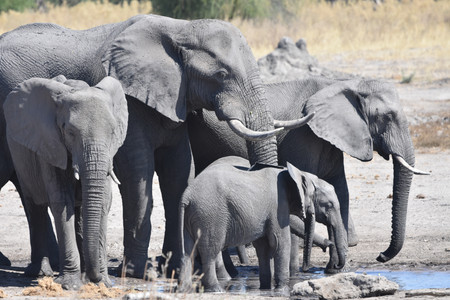 Elephants at Water Hole