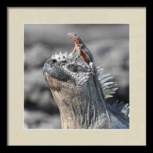 Reptile Partners, Framed Print