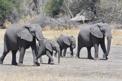 Elephants Arriving at Water Hole