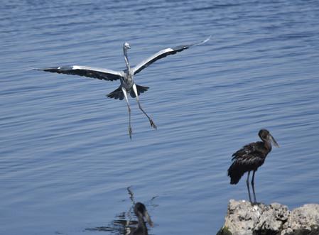 Heron Landing 01