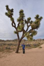 Leaning Joshua Tree