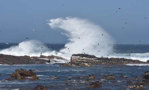 Cormorants, Wind and Sea