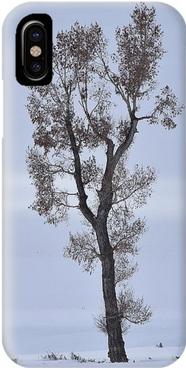 Lone Cottonwood iPhone Case