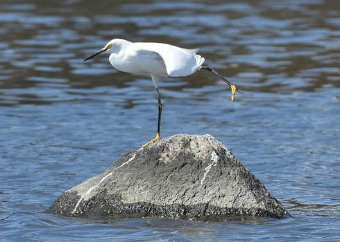 Egret Leg Lift