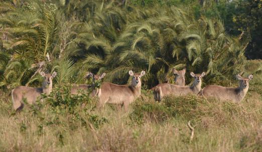 Kudu and Pondo Palms