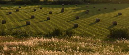 Hayfield near Bozeman