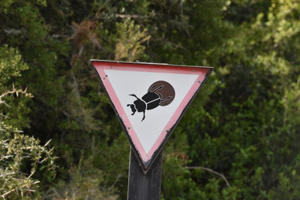 Dung Beatle Road Sign