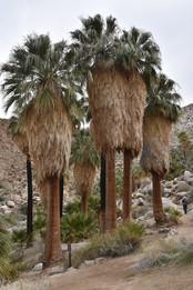 Thirtynine Palms Oasis
