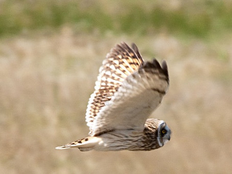 Abiquiu: The Hoot of the Owl