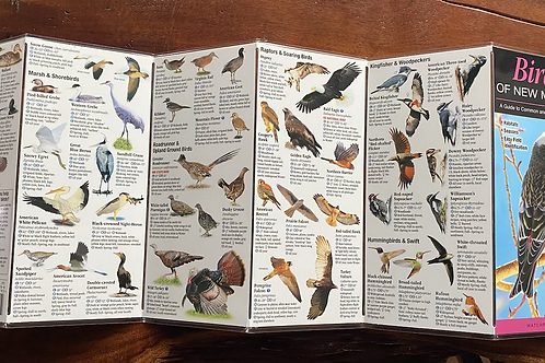 Birds of New Mexico Reference Field Guide